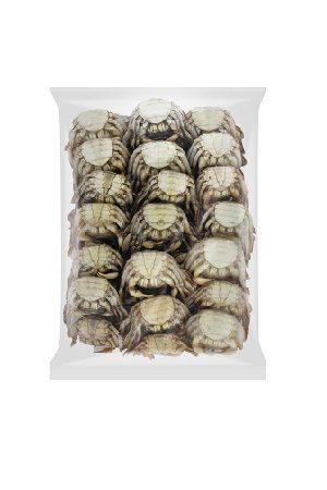 Varuna Crab/面包蟹